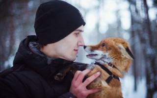 2 вида лис, которых можно содержать в домашних условиях: чем кормить