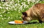 4 вещи, что любят кошки больше всего: валериана, кошачья мята, коробки, запахи