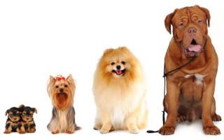 Классификация собак: группы пород по параметрам РКФ и FCI