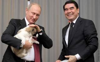 Лабрадор Кони: собака президента, описание и характеристика