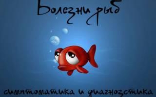 Болезни аквариумных рыб: лечение в домашних условиях, внешние признаки