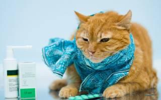 Насморк у кота или кошки: как и чем лечить в домашних условиях, что делать если кот чихает