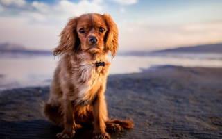 Лямблиоз у собак: симптомы, лечение и опасен ли для человека