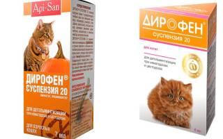 Профендер для кошек и котят: инструкция по применению