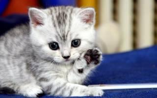 Запор у котенка в 1, 1,5 и 2 месяца: что делать в домашних условиях