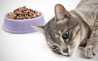 Кошку рвет кормом после еды: 5 причин и лечение в домашних условиях