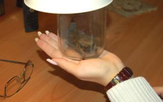 Летучая мышь в домашних условиях: что едят и чем кормить, как содержать