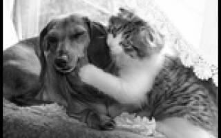 Пропала собака: что делать и почему собака ушла из дома