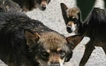 Отрава для собак: чем и как травят собак догхантеры, что делать