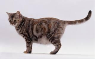 Как понять что кошка беременна: признаки беременности, как понять, что кошка скоро родит