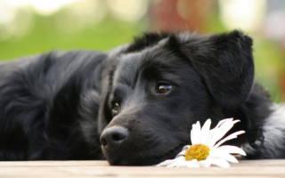 5 причин запора у собаки: что делать в домашних условиях, каким лекарством поить