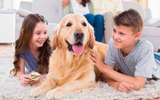 Собаки-компаньоны: 25 лучших пород для квартиры, семьи и ребенка