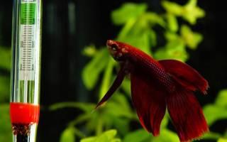 Аквариум: какая температура должна быть для различных рыбок и других обитателей