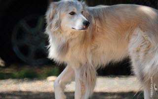 Артрит у собак: симптомы и лечение, лечение других болезней суставов