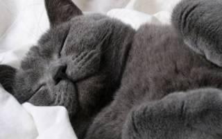 Почему кошки любят спать на людях: что это значит, сколько спят кошки в сутки