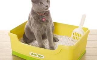 Как воспитывать котенка, кота или кошку: ласковыми, ручными и спокойными