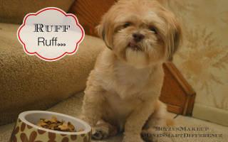 Как перевести собаку с натурального на сухой корм и наоборот, с сухого на натуральный