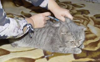 10 лучших обезболивающих препаратов для кошек и котов
