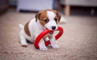 Как успокоить собаку или щенка когда они бесятся: советы и рекомендации