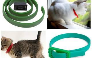 Ошейник от блох для кошек: как действует и какой лучше, инструкция по применению