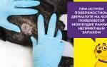 Пиодермия у собак: лечение и симптомы болезни, группа риска