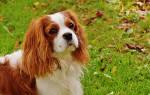 Блошиный дерматит у кошек и собак: как и чем лечить в домашних условиях