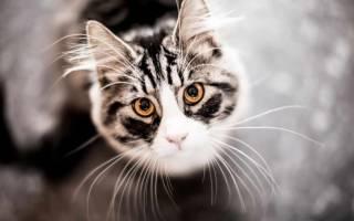 16 самых интересных фактов о кошках и котах: интересная информация о домашних и диких котах