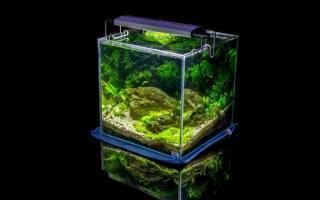 Объем аквариум: как рассчитать и для чего, какие рыбки подходят для разных размеров емкости