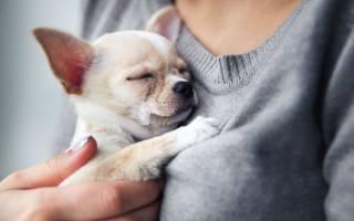5 причин, почему собака дрожит и трясется: патологические, физиологические и другие
