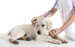 Что делать если собака подавилась и не может откашляться: симптомы и удаление кости