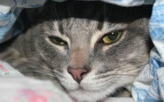 3 вида вирусного энтерита у кошек: причины, симптомы и лечение