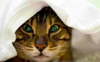 Простуда у кошек: симптомы и лечение, чем и как вылечить в домашних условиях, осложнения и профилактика