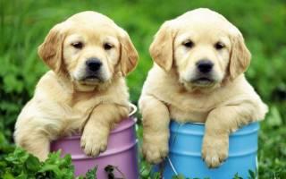 5 видов эктопаразитов у собак: что это такое, профилактика