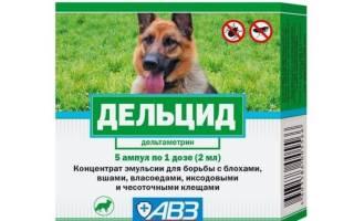 Дельцид: инструкция по применению для собак, показания к использованию и побочные действия