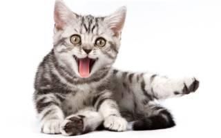 Геморрой у кота: симптомы и лечение в домашних условиях