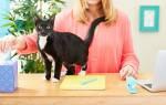 Аллергия на кота или кошку: симптомы у детей и взрослых и как избавиться в домашних условиях