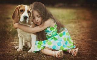 Возраст собаки по человеческим меркам: таблица, методики расчета и внешние признаки