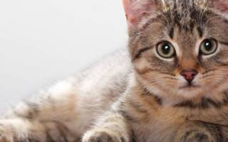 Мазь ям для кошек и собак: инструкция по применению