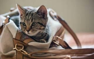 Котенок: как ухаживать в домашних условиях, список необходимых вещей