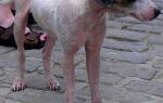 Мокнущая и сухая экзема у собак: причины, симптомы и лечение в домашних условиях
