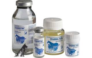 Травматин для кошек и собак: инструкция по применению