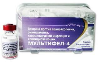 Мультифел 4: инструкция по применению вакцины для кошек, побочные эффекты и противопоказания