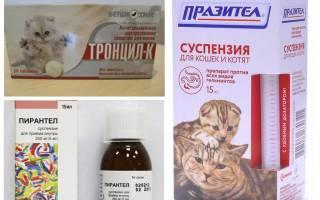 5 причин, почему кошка чешется до болячек на шее, но блох нет: причины и лечение в домашних условиях