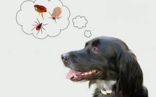 Капли от блох и клещей для собак на холку: какие лучше, принцип действия
