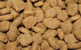 Кормление собак сухим кормом: можно ли давать щенкам, когда можно, как правильно давать