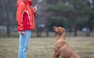 Дрессировка собак в домашних условиях: как дрессировать собаку и щенка, с какого возраста начать