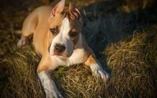 Купирование ушей и хвоста собак: зачем, как и когда это делать у 25 пород