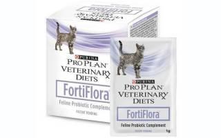 Фортифлора для кошек: инструкция по применению, показания к использованию и побочные действия