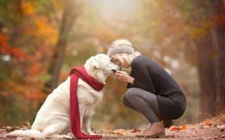 Список из 43 лучших гипоаллергенных пород собак: какие собаки не вызывают аллергию
