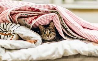 8 самых интересных повадок кошек и их обозначение